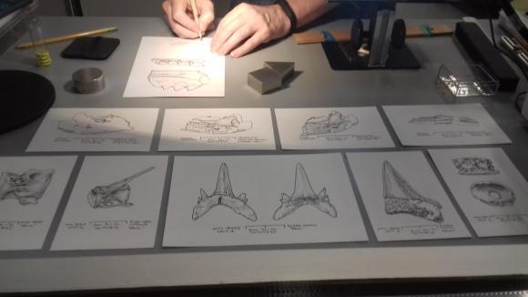 Ein Paläontologe im National History Museum in Washington bei der Arbeit.